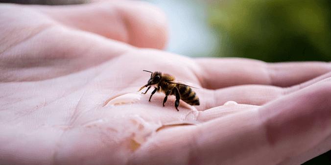 Manifest Bee