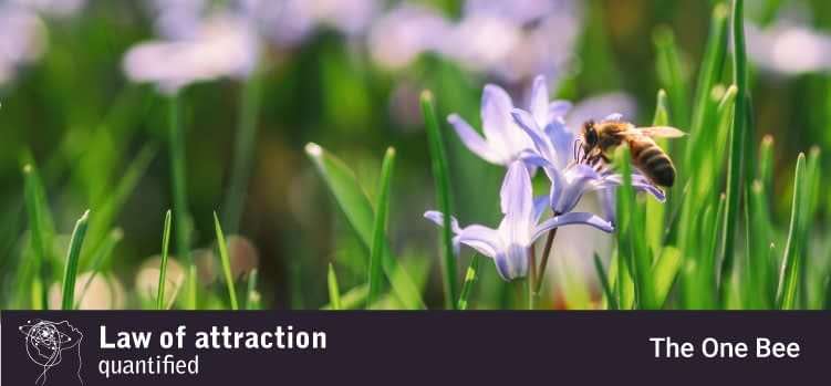 Manifesting the one bee with the law of attraction